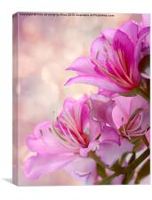 Pink Delight 2, Canvas Print