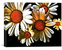Large White Daisies call Oxeye, Canvas Print