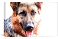 One year old German Shepherd Dog called Jess , Canvas Print