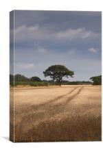 English wheatfield, Canvas Print