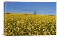 Yellow as far as the eye can see, Canvas Print