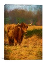 Highland cow with painterly effect, Canvas Print