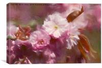 Pastel Pink Impressions, Canvas Print