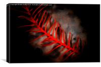 Red Feather, Canvas Print
