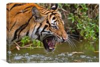 Angry Tiger, Canvas Print