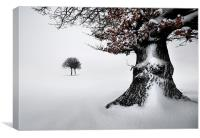 Oak in the snow, Canvas Print