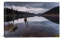 Broken Tree on Derwent Reservoir, Canvas Print