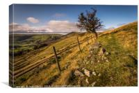 Lonely Hawthorn, Canvas Print