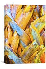 Coconut Royal Palm Bark Texture, Canvas Print