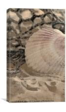 Scallop Sea Shell, Canvas Print