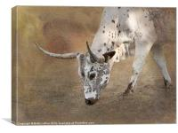 Texas Longhorn Cow, Canvas Print