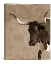 Texas Longhorn #5, Canvas Print
