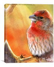 Sun Worshiper, Canvas Print