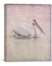 Pelican in Pastel, Canvas Print