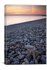 Chesil Beach Starfish, Canvas Print