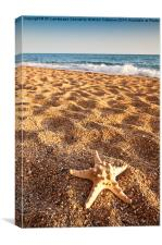 Starfish on the Beach, Canvas Print