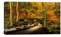 Autumn Glory in Padley Gorge, Canvas Print