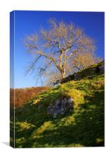 Lone Tree Above Cave Dale , Canvas Print