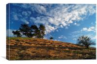 Colmers Hill                       , Canvas Print