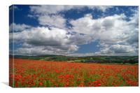 Poppy Field near Baslow,Derbyshire                , Canvas Print