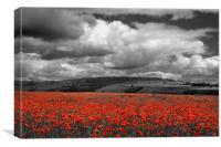 Poppy Field near Baslow,Derbyshire                , Canvas Print