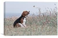 The Beagle, Canvas Print