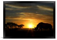 Rhino with a sunset behind, Framed Print