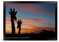 Giraffes and sunset, Framed Print