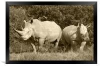 White Rhino and baby, Framed Print