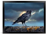 Rook on the Roof., Framed Print