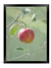 Apple of my Eye., Framed Print