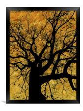 Oak tree in yellow., Framed Print