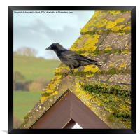 Crow on the Tiles, Framed Print