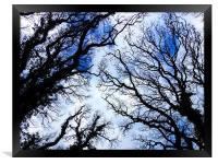 Winter Tree Tops, Framed Print