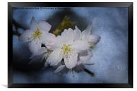 Springtime Blossom., Framed Print