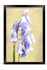 Bluebells on Cream, Framed Print