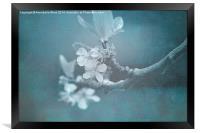 Apple Blossom Blues., Framed Print