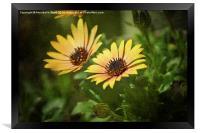 Spring Flower Smile., Framed Print