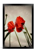 Poppies In The Sky, Framed Print