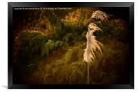The Grass Whispers., Framed Print