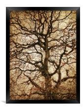 Autumn Love Tree, Framed Print