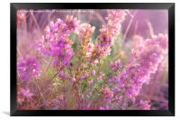 Pink Bell Heather., Framed Print