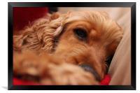 Sleeping Dog, Framed Print