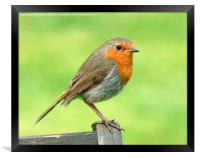 Grasmere Robin , Framed Print