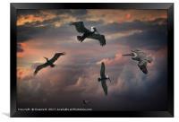 Pelican Sky, Framed Print