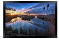 Reeds & Reflections, Framed Print