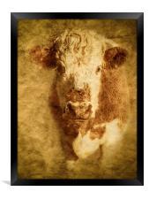 Textured Hereford Bullock, Framed Print