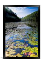 Bosherston Lily Ponds, Framed Print
