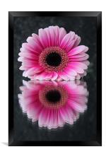 Gerbera - Reflections of Beauty, Framed Print