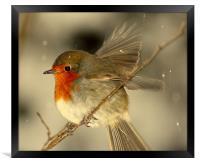 Fly Away Robin, Framed Print